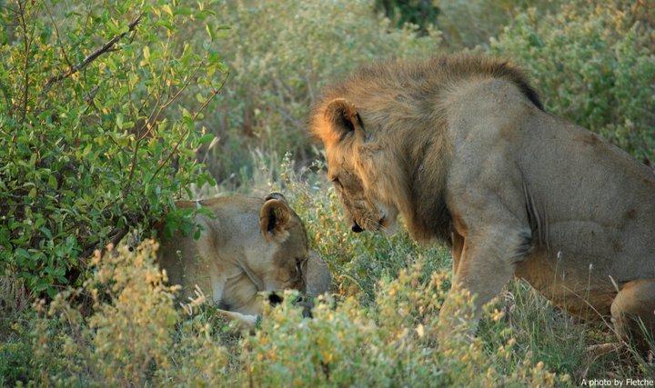 Kenya2