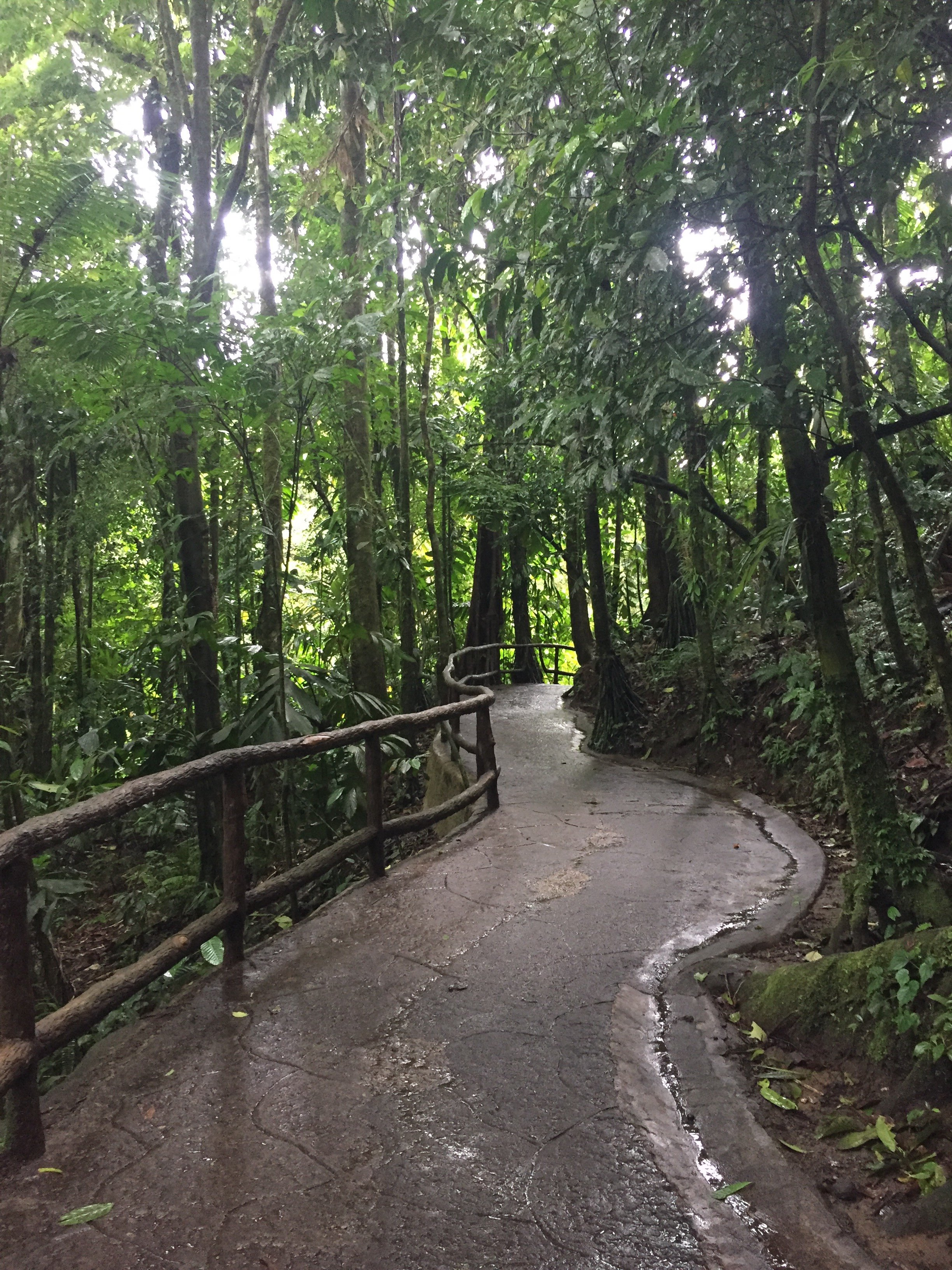 Winding Paths at Mistico Arenal Hanging Bridges Park