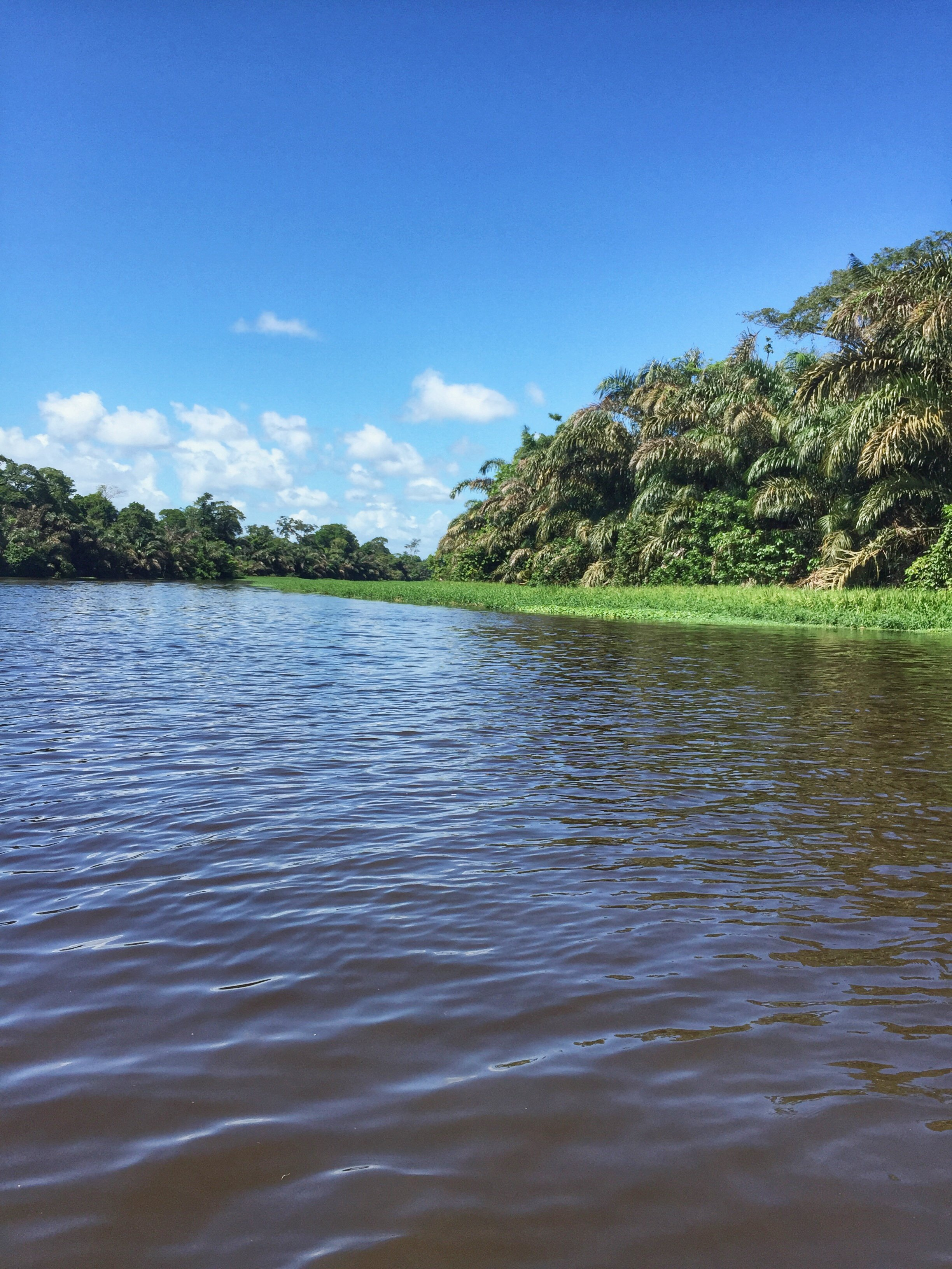 The Tortuguero River